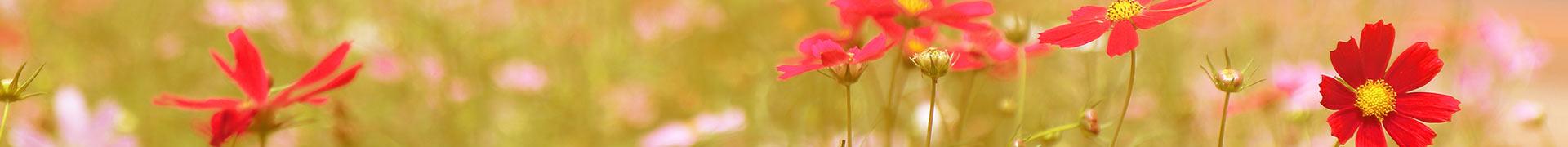 Thématique d'une aire de jeux - Cueillette de fleurs