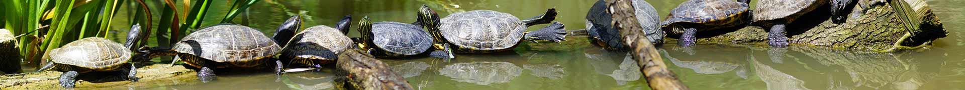 Thématique d'une aire de jeux - La famille tortue