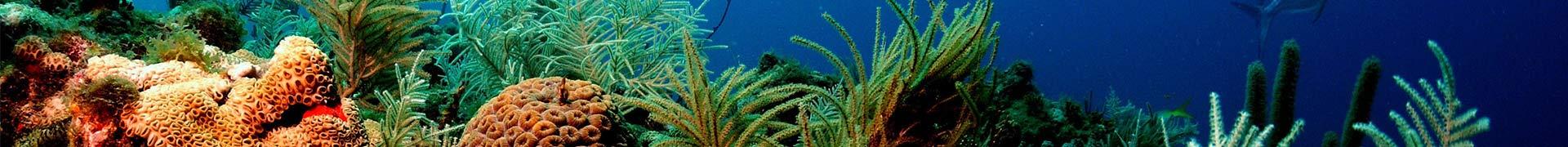 Illustration aire de jeux barrière de corail pack Récré'Action