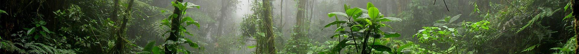 Illustration aire de jeux Jungle luxuriante pack Récré'Action