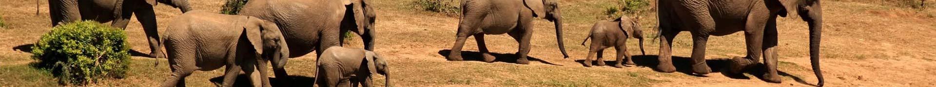 Illustration aire de jeux safari pack Récré'Action