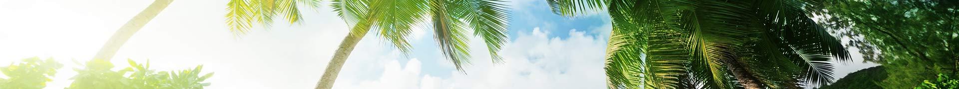 Illustration aire de jeux sous les tropiques pack Récré'Action